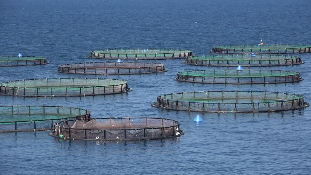 Aquaculture and marine harvest labourers